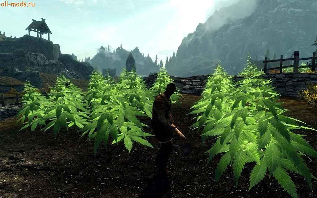 Мод для скайрима конопля документальные фильмы i про марихуану