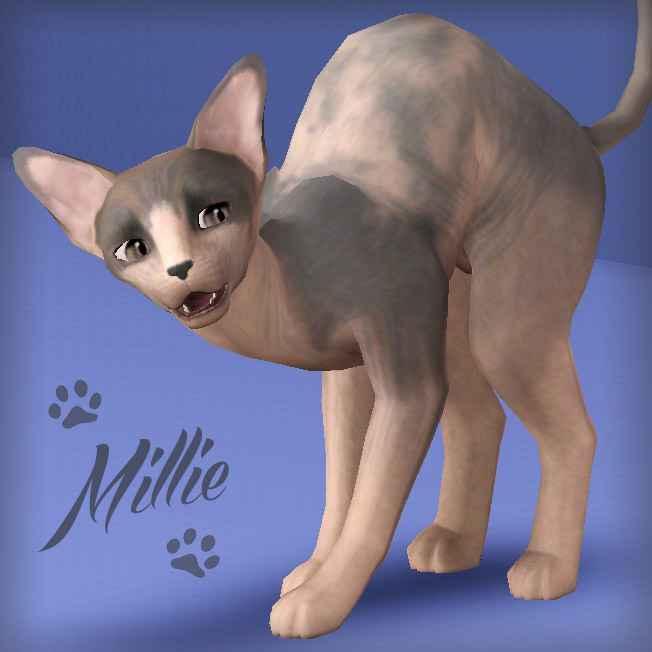 Мод Sims 3 — Кошка породы сфинкс — Millie