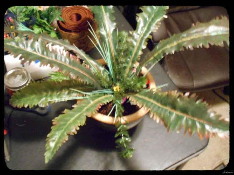 Мод Skyrim — Новогодний Корень Нирна