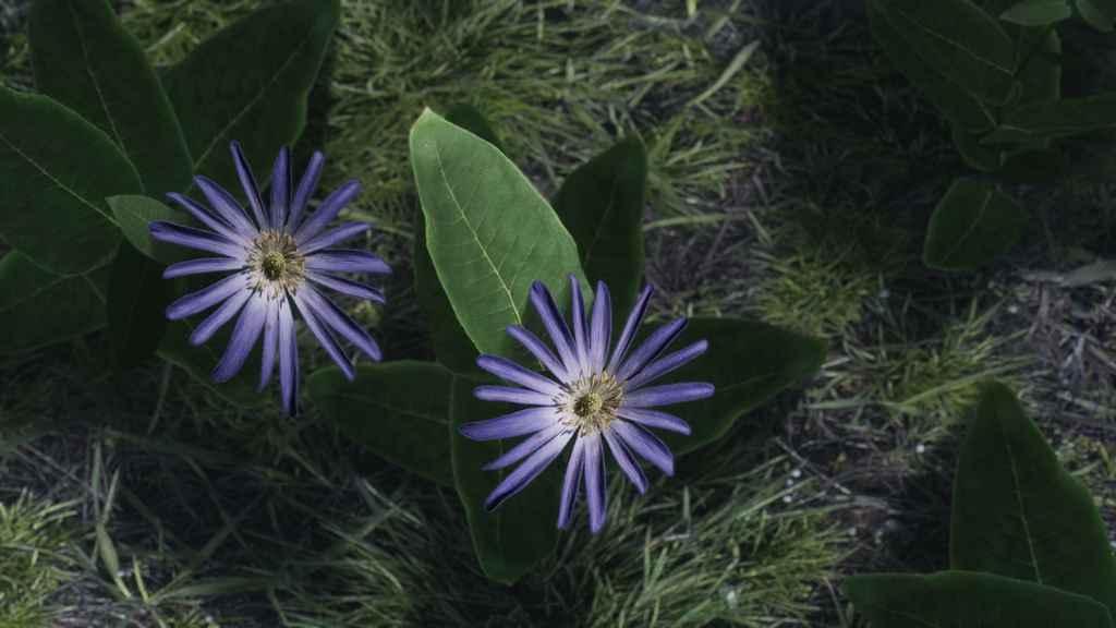 Skyrim — HD ретекстур цветов