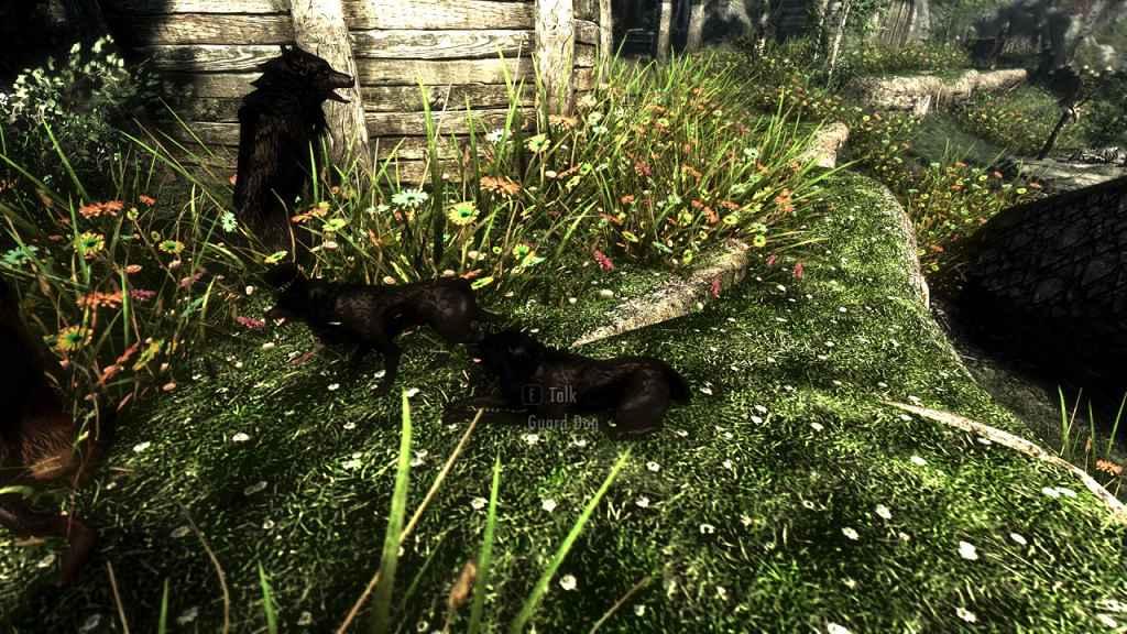 Мод Skyrim — Собаки